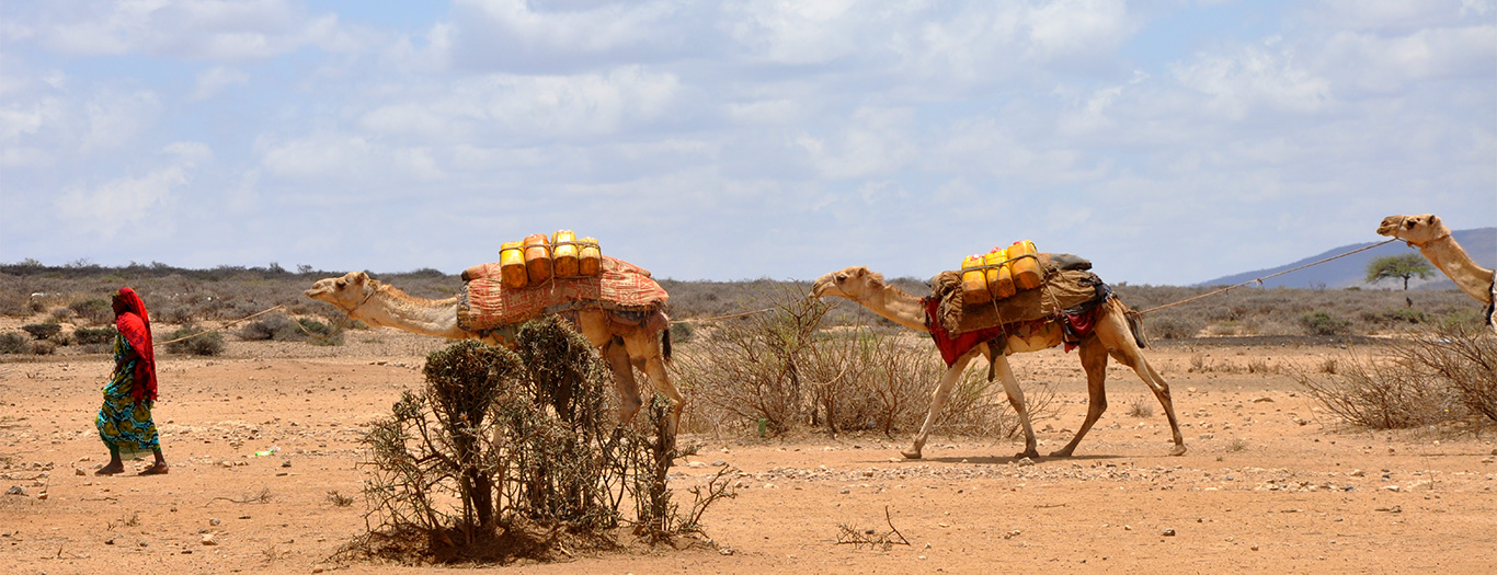 Ethiopia-3-E-Jackson Camels-1366x525